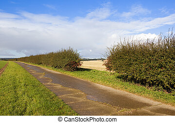 hawthorn hedgerow with berries - a hawthorn hedgerow with...