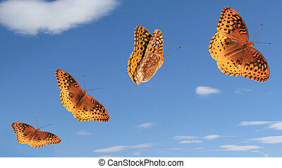 Butterfly Group with Paths - 4 separate photos and paths for...