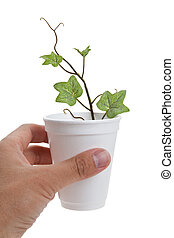 Disposable Cup and plant