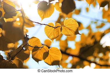 秋, 葉, 黄色, バックライト