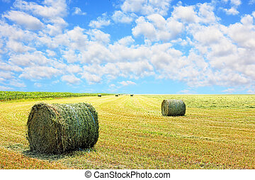 Golden stubble field and hay bales. - Golden stubble field...