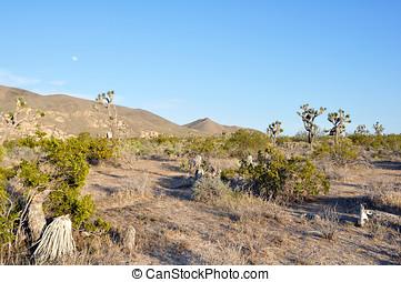 desierto, anochecer