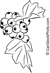 Hawthorn berries drawing - A stylized drawing of hawthorn...