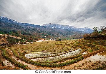 Rice field terraces. Sapa Vietnam - Rice field terraces in...