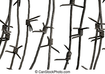 Barbwire - Image of barbwire sections with sharp thorns on...