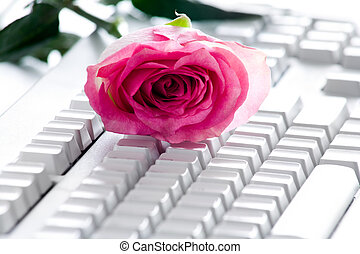 Rose on keyboard - Photo of pink rose bud lying on white...