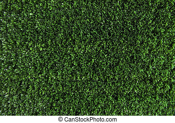Green spring - Wallpaper of green fresh grass growing on...