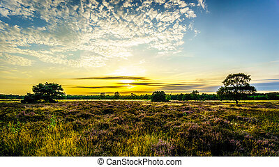 Sunrise over the Ermelose Heide with Calluna Heathers in...