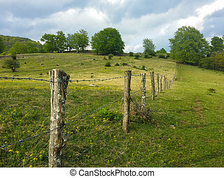 Barbwire fence in a fresh green grass field
