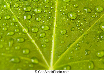 Leaf background - Macro image of green leaf with lots of...