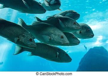 fish in oceanarium in blue depth water - fish in aquarium...