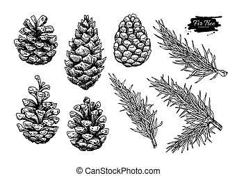 Pine cone and fir tree set. Botanical hand drawn vector...