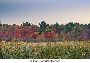 autumn wetlands and trees - colorful tree line and wetlands...