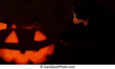 Helloween pumpkin and candles and cat