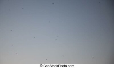 mosquitoes group flock of flying in the air on evening sky...