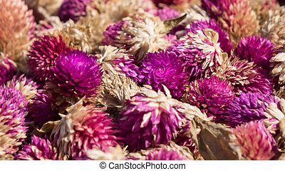 Amaranth flowers