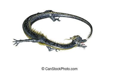 dragon - Image of a dragon.