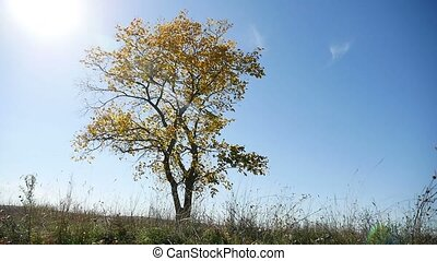 lonely in the autumn on tree a background of blue sky nature