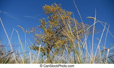 grass in field tree in background lonely in autumn on...