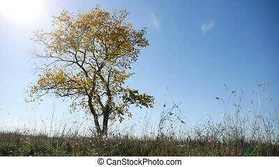 lonely in the autumn tree on a background of blue sky nature...
