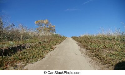 road trail in the hill lonely tree trip blue sky nature