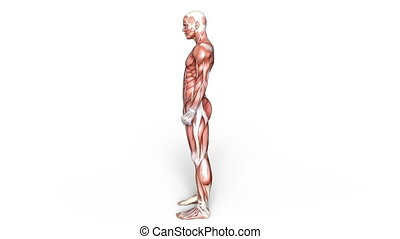 male lay figure - Image of a male lay figure.