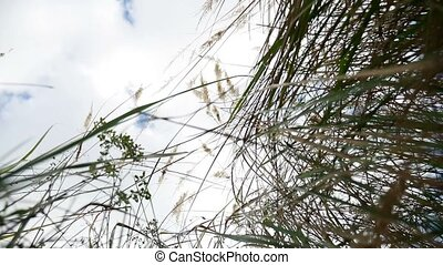 lonely dry grass in the field on background of blue sky autumn nature tree