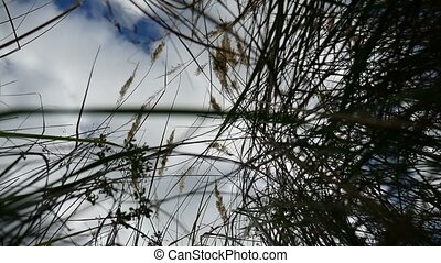 field lonely dry grass in the field on background of blue sky autumn tree nature