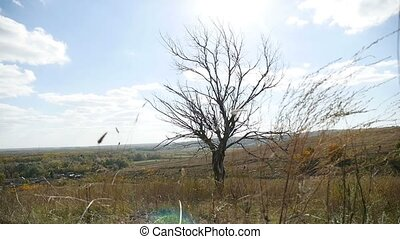 Dry lonely in the field on tree a background of blue sky autumn nature