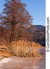 Tree and Reeds in a Frozen Lake - Italy - Tree and reeds in...