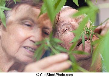Happy senior couple smelling Cannabis plant - Couple of...