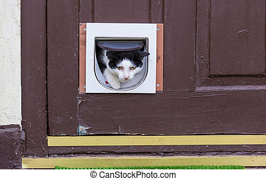 Cat in door - Close-up shot of the pretty tabby cat in the...