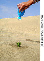 Watering a cactus in the desert