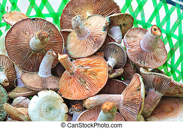 Fresh wild mushrooms - Pile up together fresh wild mushrooms
