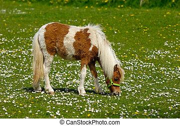 Horse eating green grass