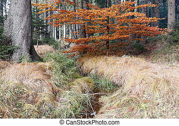 Forest autumn still life with the streamlet - Image of the...
