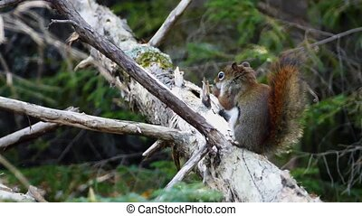 Squirrel sitting on tree in forest