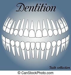 dental records 3D - 3D dental records, teeth vector 3D