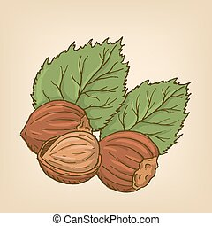 Hazelnuts with leaves. Vector illustration.