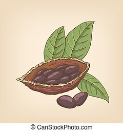 Cocoa pods, cocoa beans and leaves. Vector illustration.