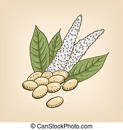 Vector cartoon illustration with amaranth seeds and flower....