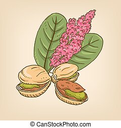 Pistachio nuts with leaves. Vector illustration. Hand drawn...