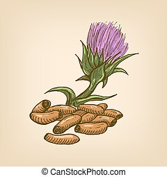 Seeds of a Milk Thistle with flower. Vector illustration....
