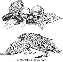 Black and white sketches of vegetables
