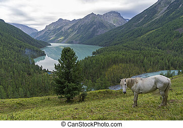 White horse on a hillside. Kucherla lake. Altai Mountains, Russia.