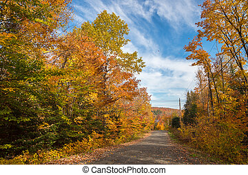 Trees in autumn colors along the road, near Saint-Jerome,...