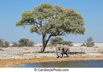 Elephant and springbok antelopes - An African elephant and...