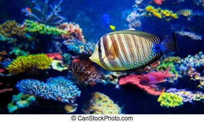 Colorful aquarium. 4k, 25fps - Colorful aquarium, beautiful...