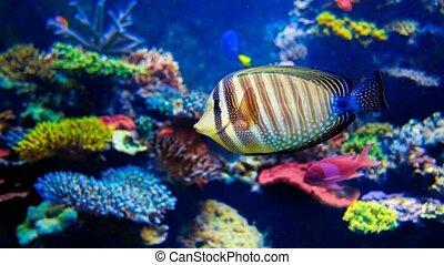 Colorful aquarium. 4k, 25fps - Colorful aquarium, beautiful...