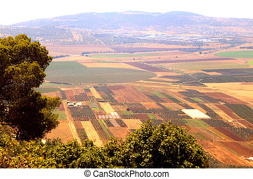View on agriculture valley with fields and olive plantations, Israel